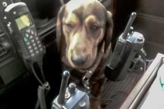 FFW Feuerwehr Meiserich Hund